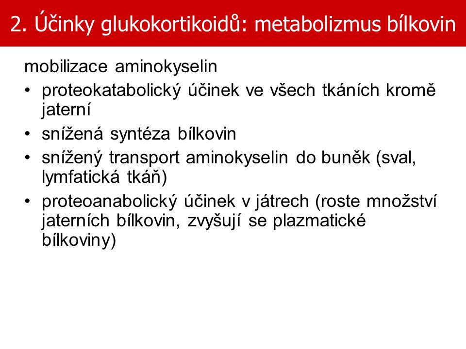 2. Účinky glukokortikoidů: metabolizmus bílkovin