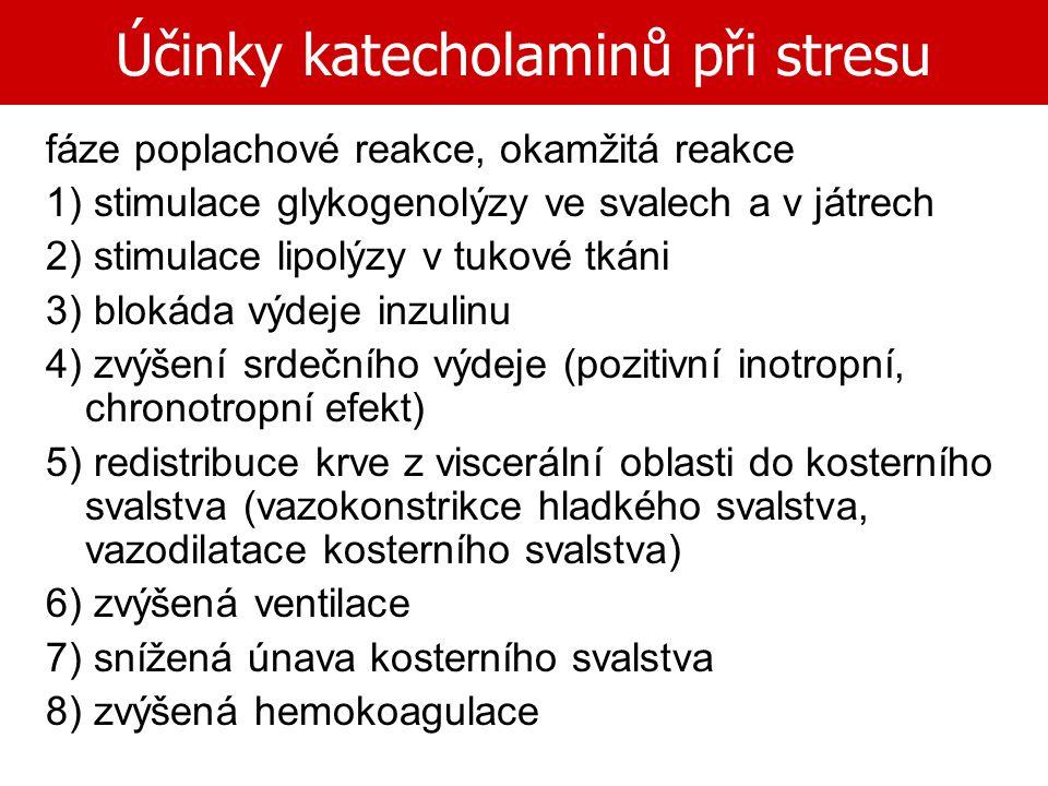 Účinky katecholaminů při stresu