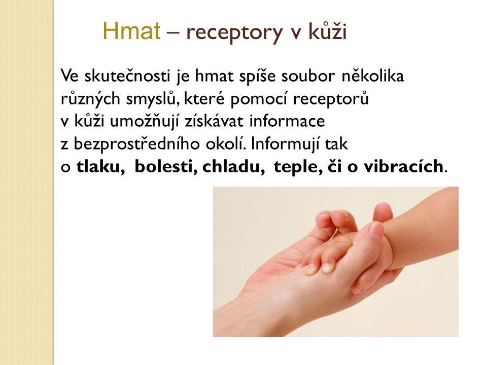 Hmat – receptory v kůži