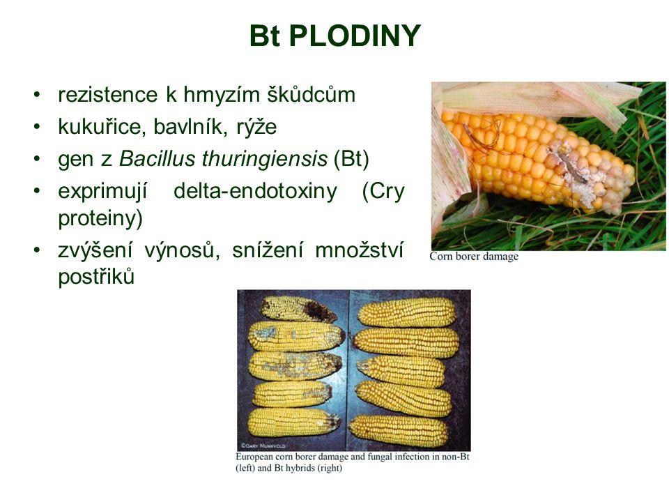 Bt PLODINY rezistence k hmyzím škůdcům kukuřice, bavlník, rýže