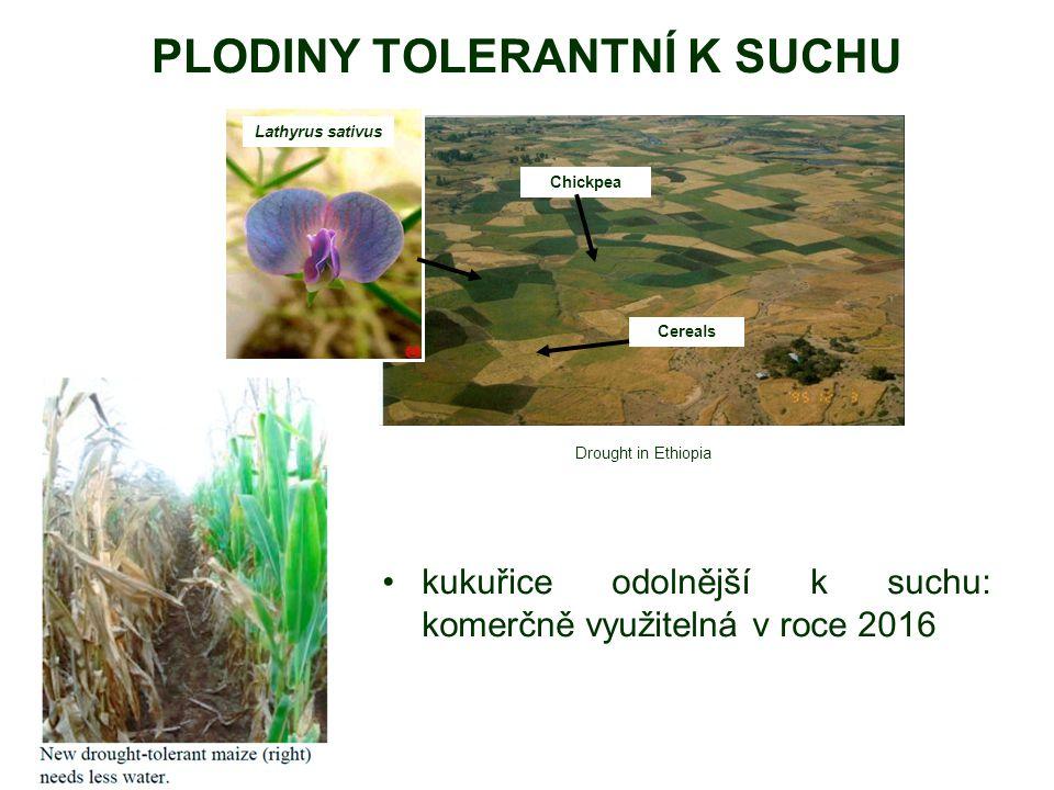PLODINY TOLERANTNÍ K SUCHU