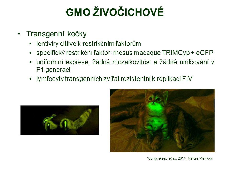 GMO ŽIVOČICHOVÉ Transgenní kočky
