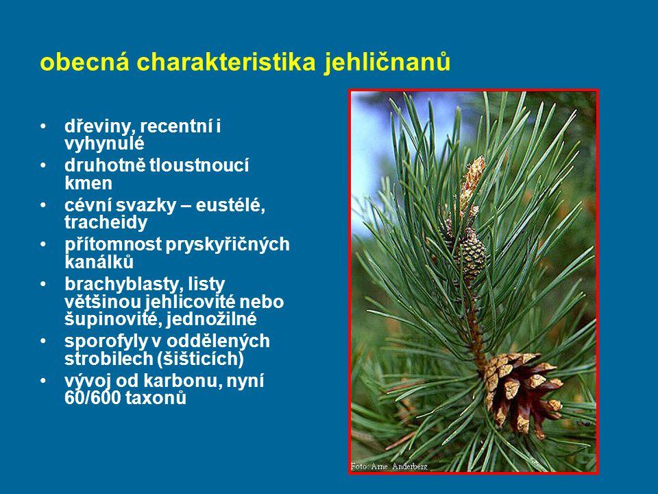 obecná charakteristika jehličnanů