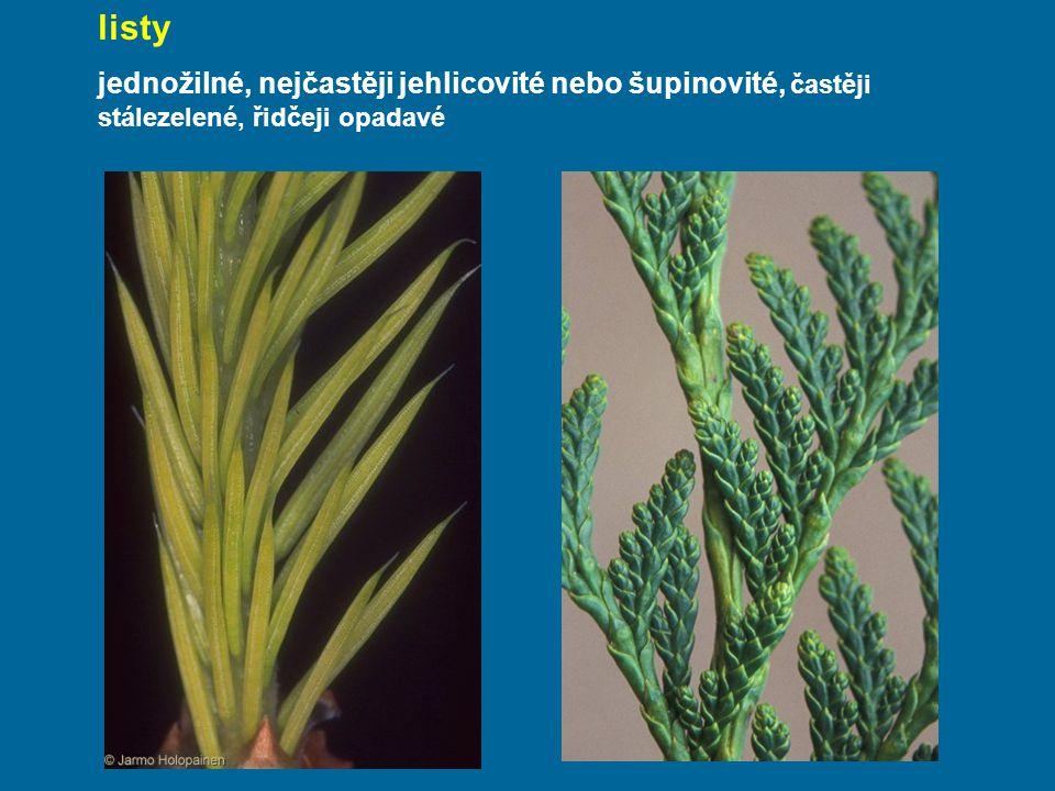 listy jednožilné, nejčastěji jehlicovité nebo šupinovité, častěji stálezelené, řidčeji opadavé