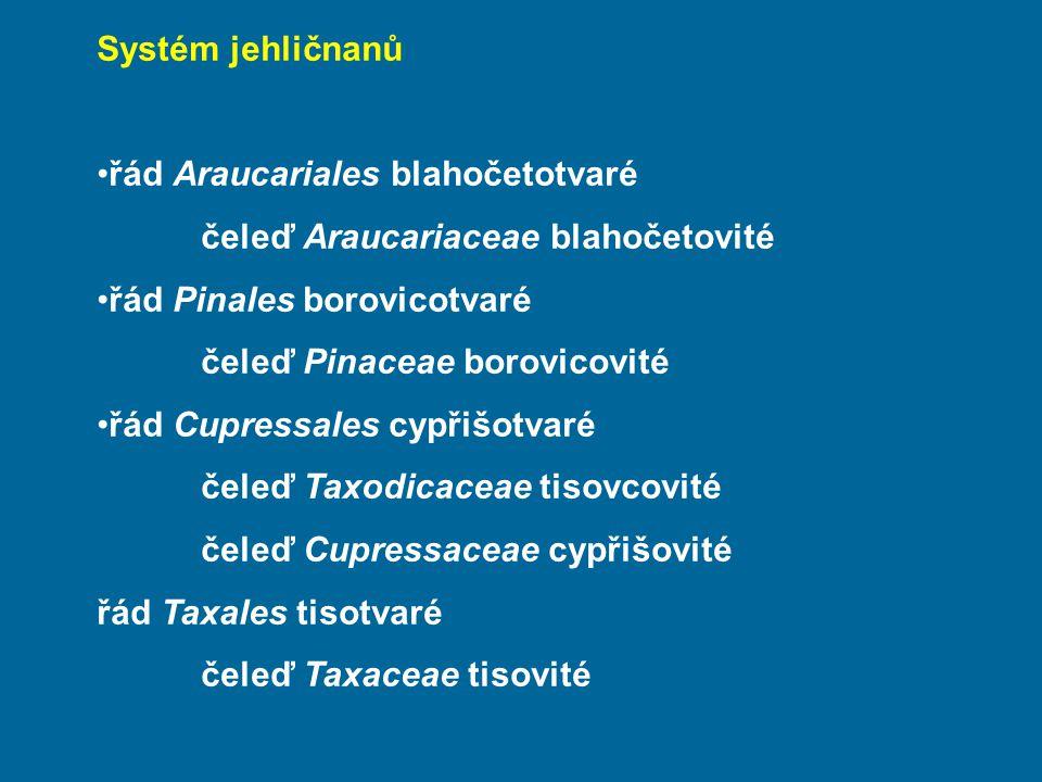 Systém jehličnanů řád Araucariales blahočetotvaré. čeleď Araucariaceae blahočetovité. řád Pinales borovicotvaré.