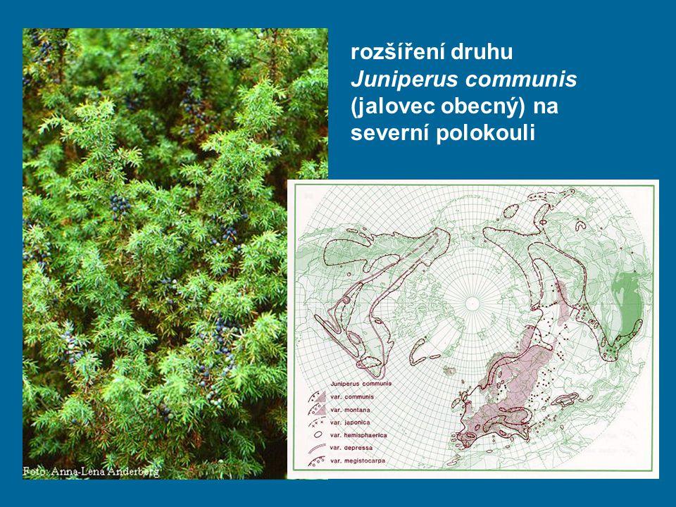 rozšíření druhu Juniperus communis (jalovec obecný) na severní polokouli