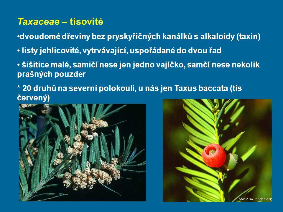 Taxaceae – tisovité dvoudomé dřeviny bez pryskyřičných kanálků s alkaloidy (taxin) listy jehlicovité, vytrvávající, uspořádané do dvou řad.