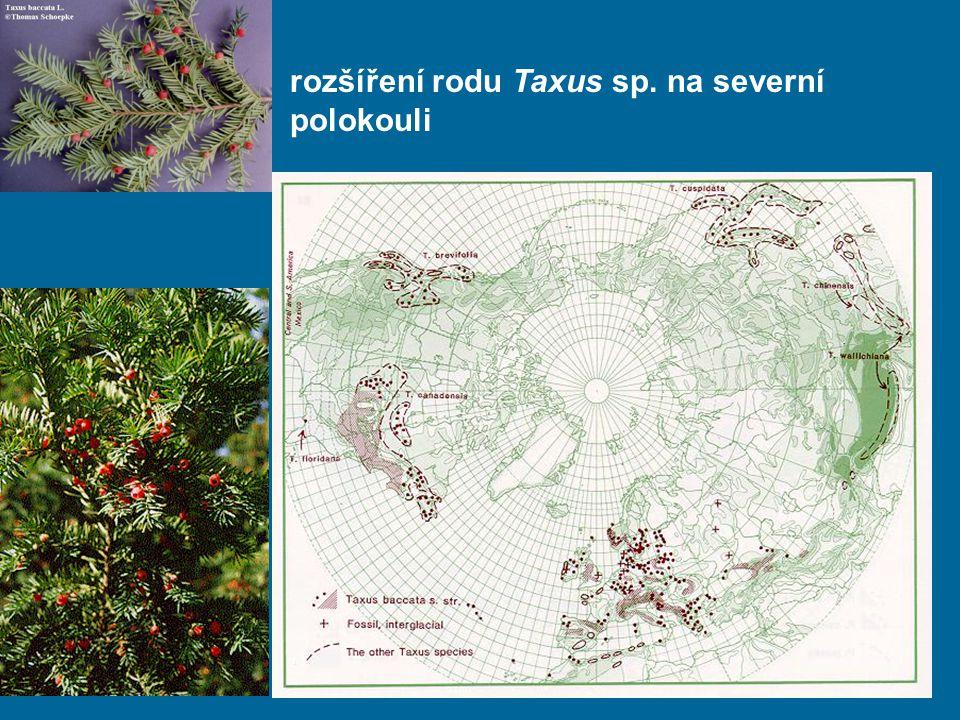 rozšíření rodu Taxus sp. na severní polokouli