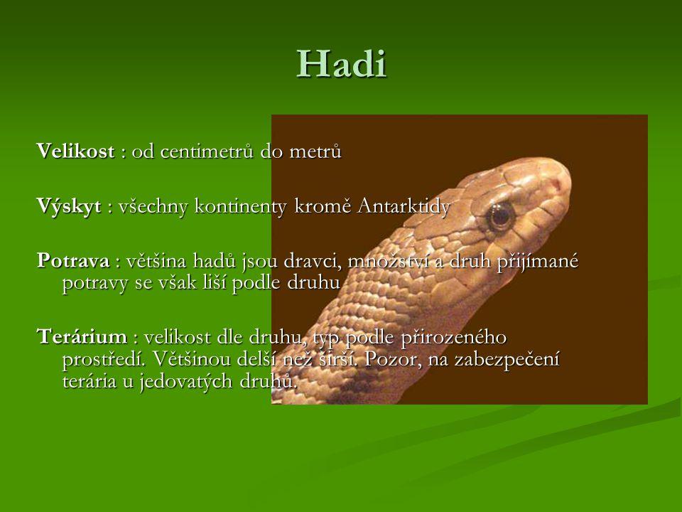 Hadi Velikost : od centimetrů do metrů