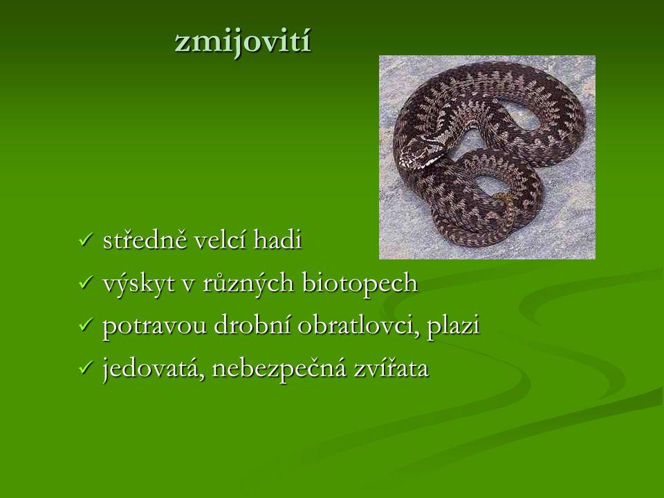 zmijovití středně velcí hadi výskyt v různých biotopech