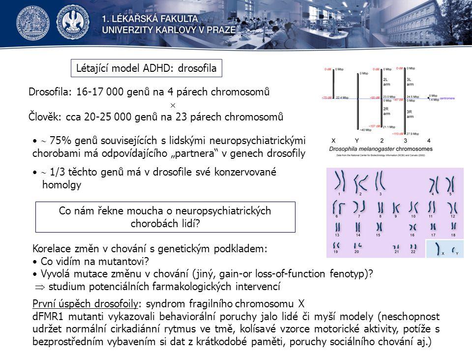 Létající model ADHD: drosofila