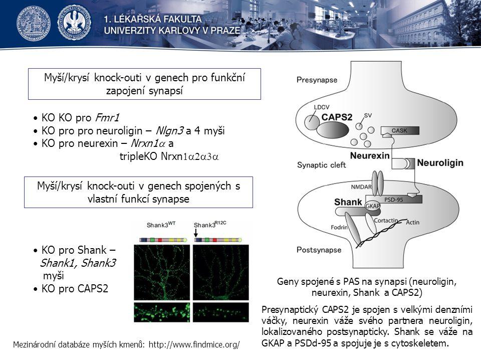 Myší/krysí knock-outi v genech pro funkční zapojení synapsí