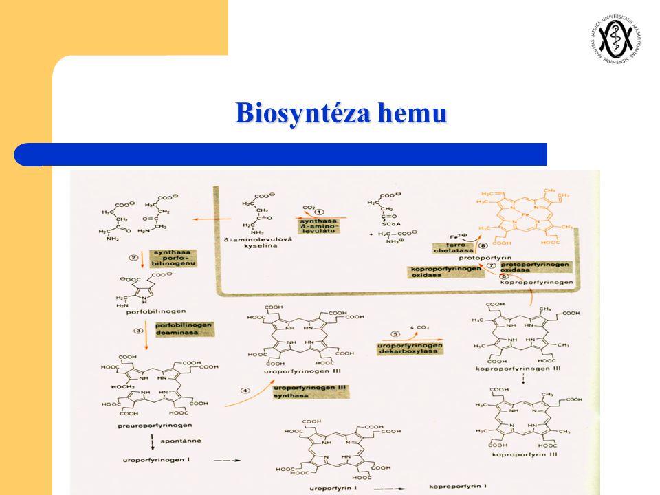 Biosyntéza hemu