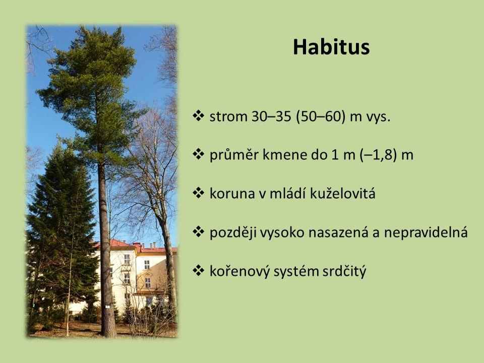 Habitus strom 30–35 (50–60) m vys. průměr kmene do 1 m (–1,8) m