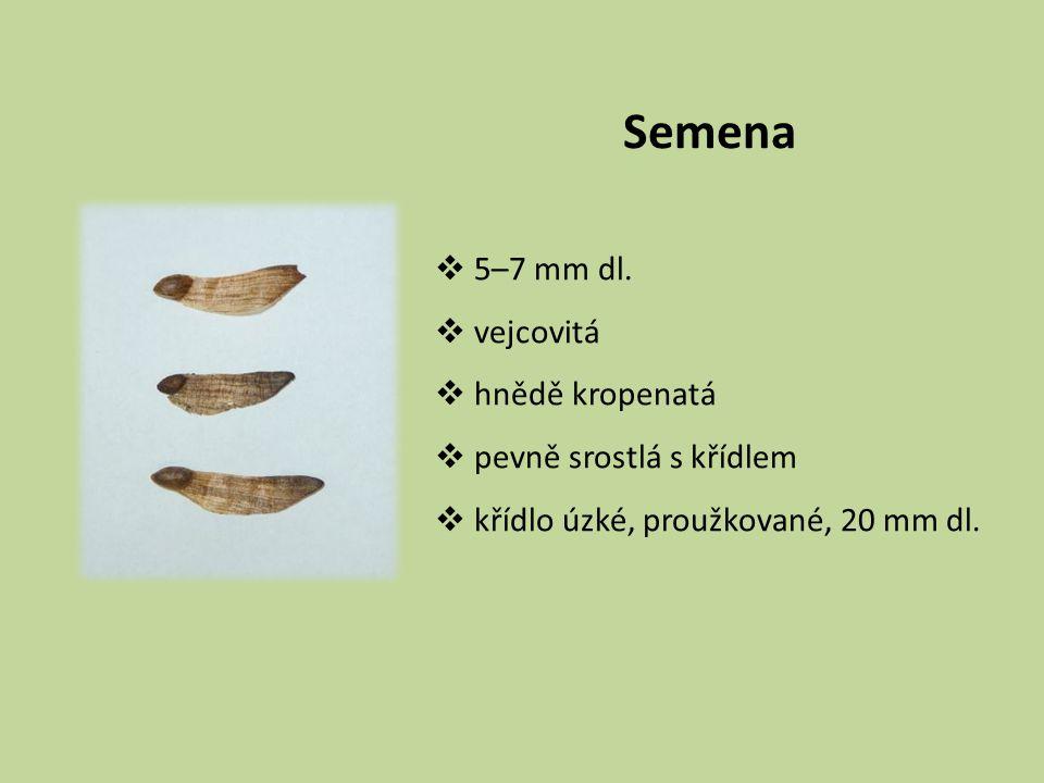 Semena 5–7 mm dl. vejcovitá hnědě kropenatá pevně srostlá s křídlem