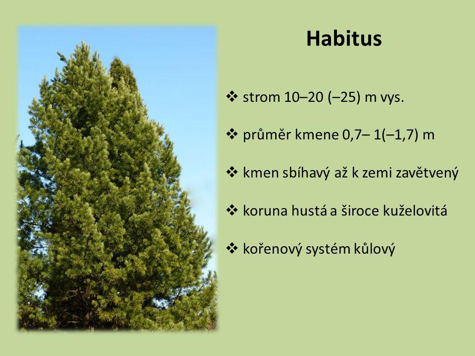 Habitus strom 10–20 (–25) m vys. průměr kmene 0,7– 1(–1,7) m