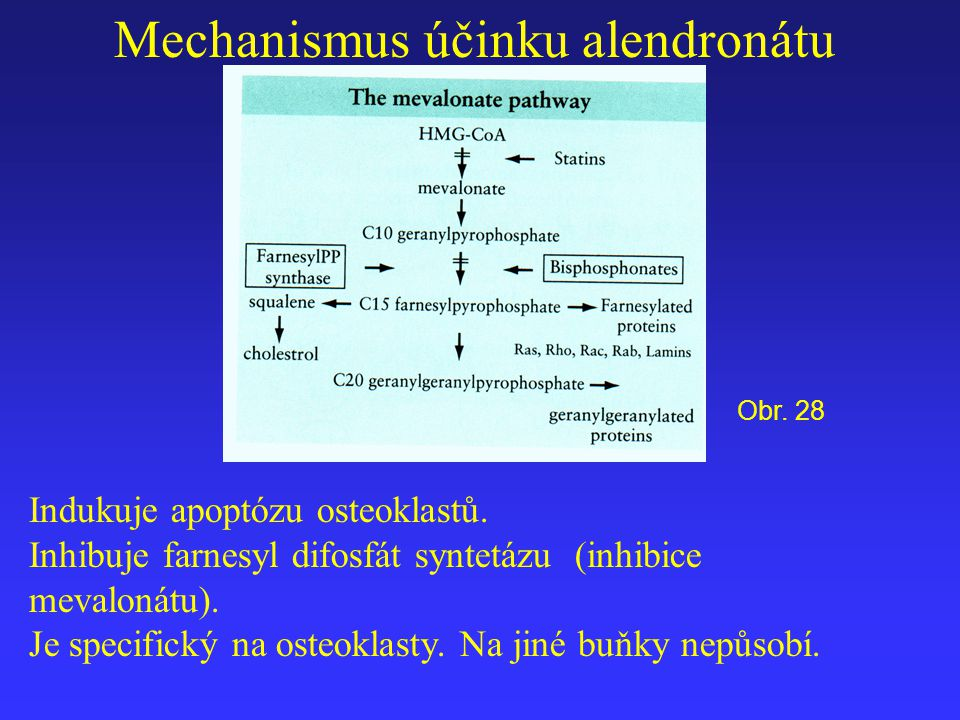 Mechanismus účinku alendronátu