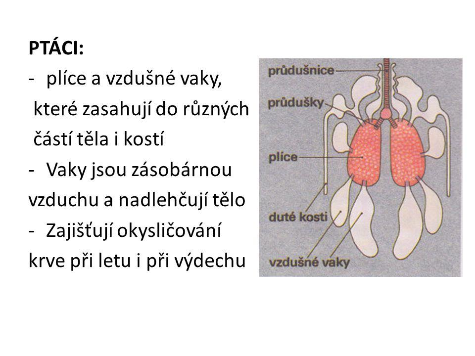 PTÁCI: plíce a vzdušné vaky, které zasahují do různých. částí těla i kostí. Vaky jsou zásobárnou.