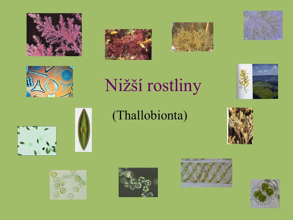 Nižší rostliny (Thallobionta)