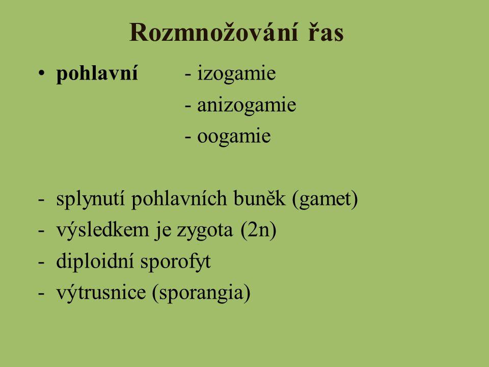 Rozmnožování řas pohlavní - izogamie - anizogamie - oogamie