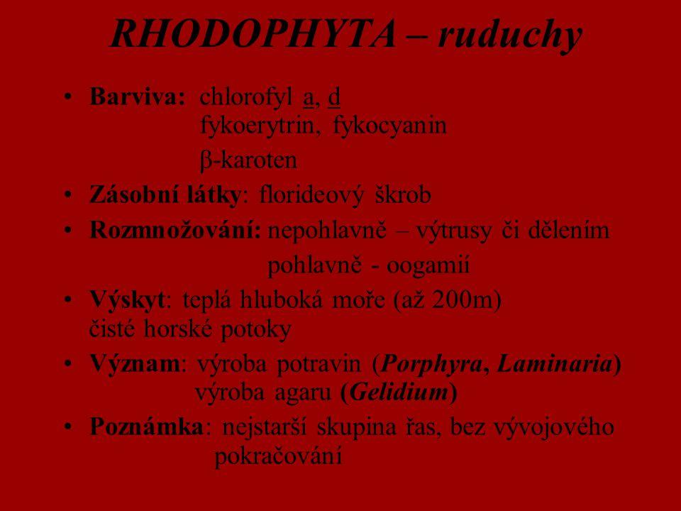 RHODOPHYTA – ruduchy Barviva: chlorofyl a, d fykoerytrin, fykocyanin