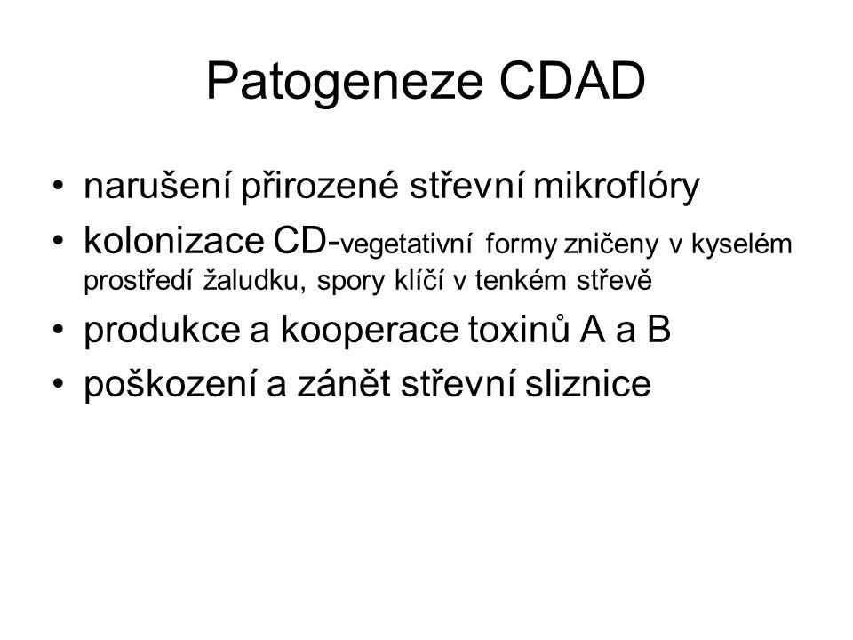 Patogeneze CDAD narušení přirozené střevní mikroflóry