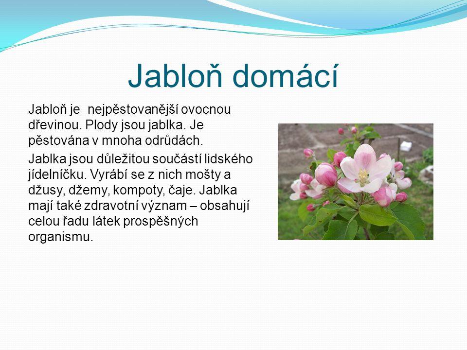 Jabloň domácí Jabloň je nejpěstovanější ovocnou dřevinou. Plody jsou jablka. Je pěstována v mnoha odrůdách.