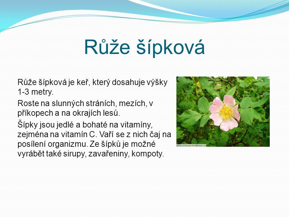 Růže šípková Růže šípková je keř, který dosahuje výšky 1-3 metry.