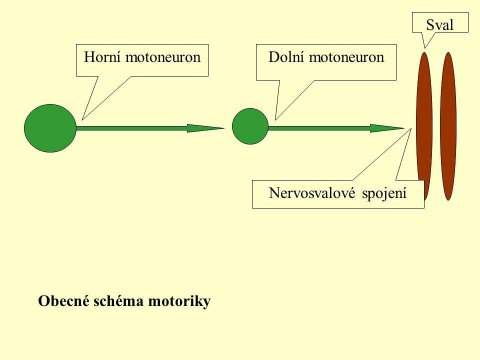 Obecné schéma motoriky