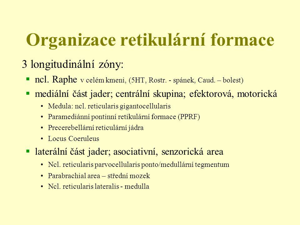 Organizace retikulární formace