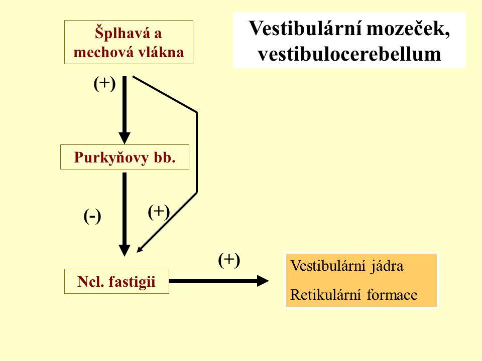 Vestibulární mozeček, vestibulocerebellum Šplhavá a mechová vlákna