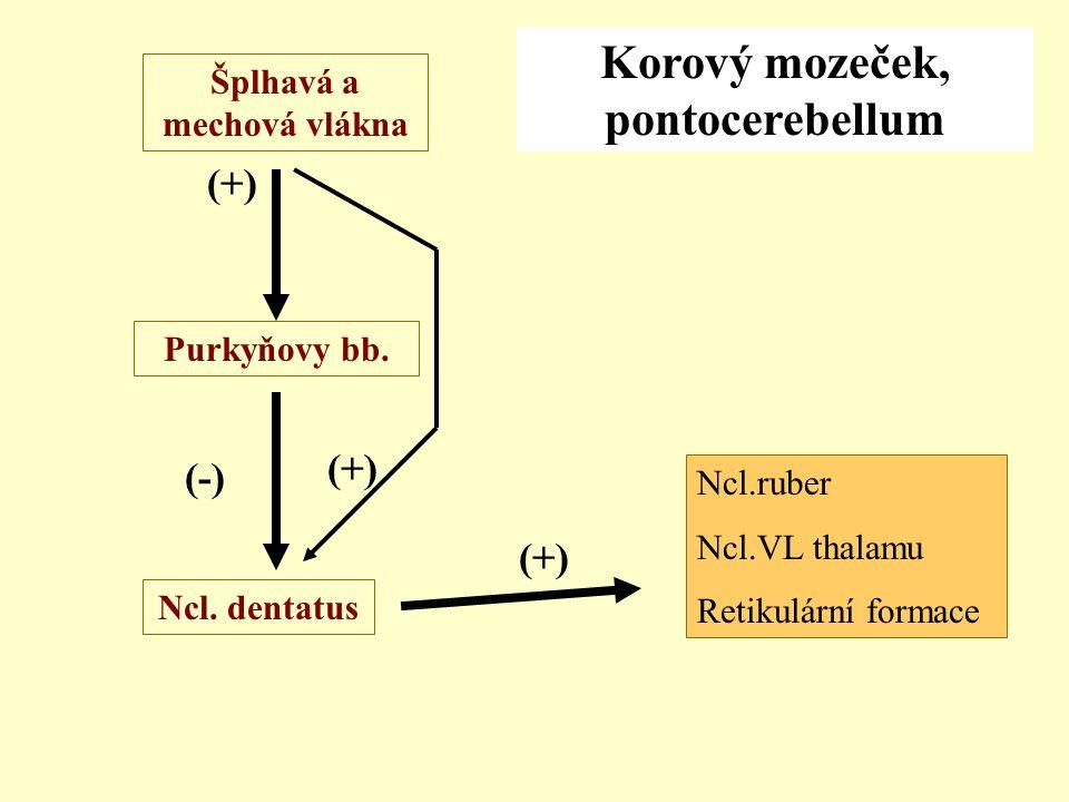Korový mozeček, pontocerebellum Šplhavá a mechová vlákna