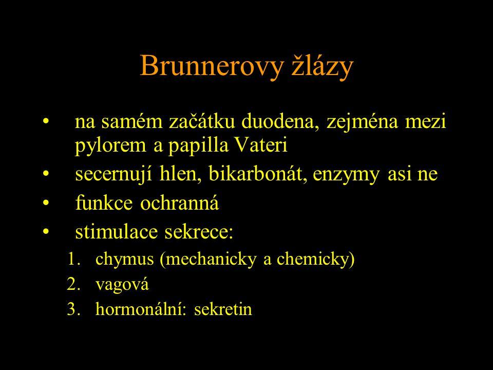 Brunnerovy žlázy na samém začátku duodena, zejména mezi pylorem a papilla Vateri. secernují hlen, bikarbonát, enzymy asi ne.