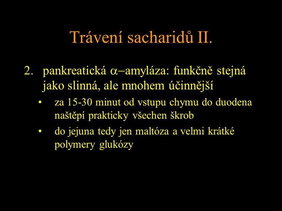 Trávení sacharidů II. pankreatická a-amyláza: funkčně stejná jako slinná, ale mnohem účinnější.