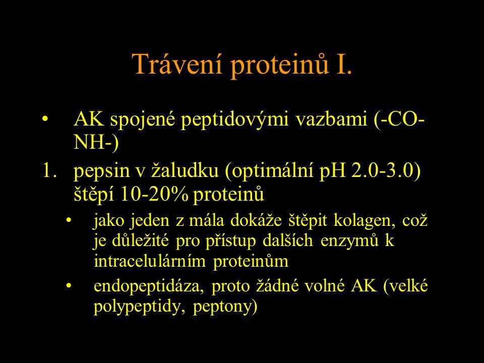 Trávení proteinů I. AK spojené peptidovými vazbami (-CO-NH-)