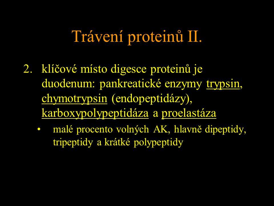 Trávení proteinů II.