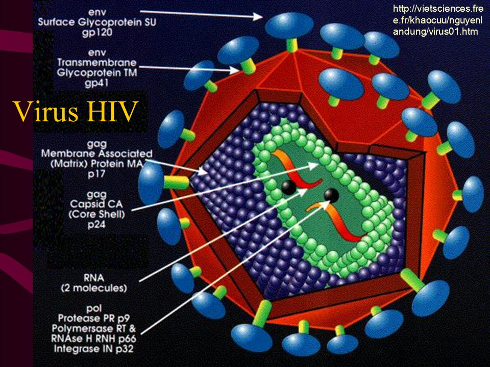 http://vietsciences.free.fr/khaocuu/nguyenlandung/virus01.htm Virus HIV