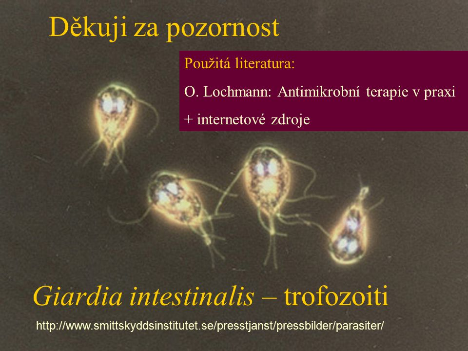 Giardia intestinalis – trofozoiti