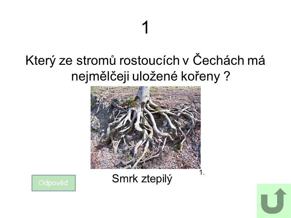 Který ze stromů rostoucích v Čechách má nejmělčeji uložené kořeny