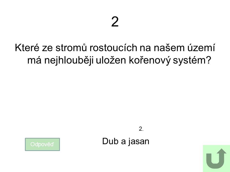 2 Které ze stromů rostoucích na našem území má nejhlouběji uložen kořenový systém Dub a jasan. 2.
