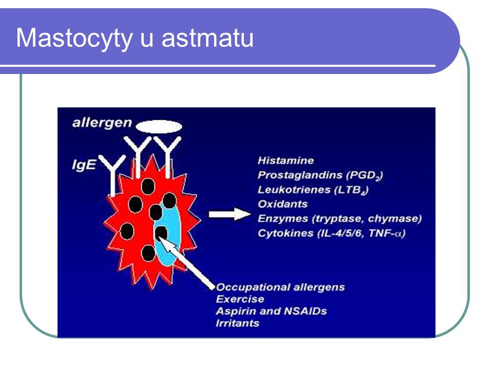 Mastocyty u astmatu
