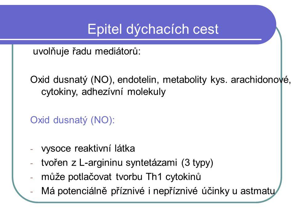 Epitel dýchacích cest uvolňuje řadu mediátorů:
