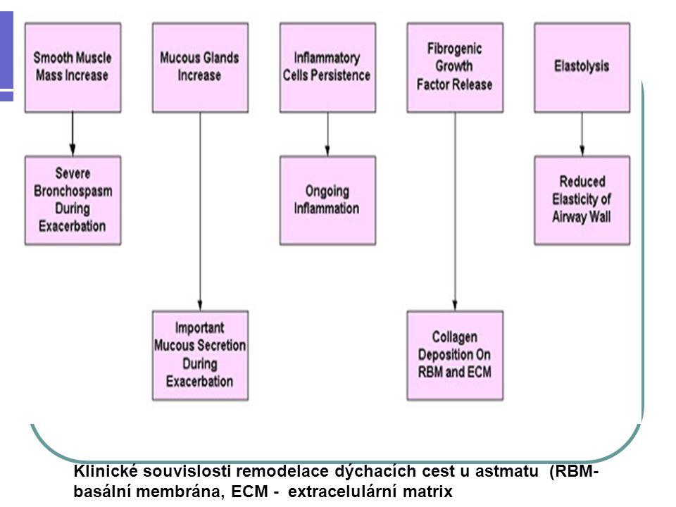 Klinické souvislosti remodelace dýchacích cest u astmatu (RBM- basální membrána, ECM - extracelulární matrix
