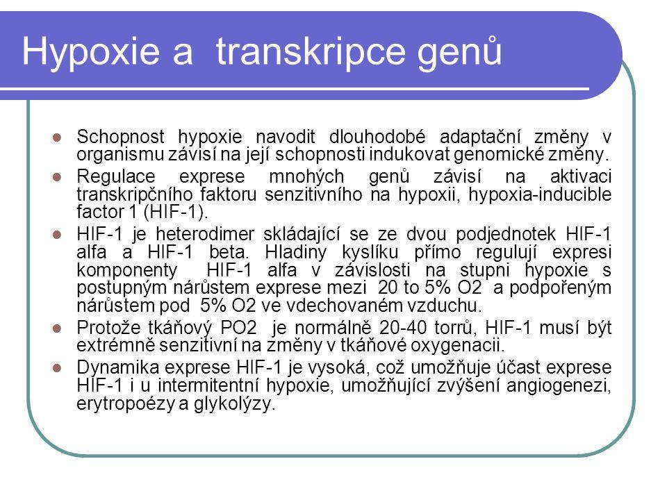 Hypoxie a transkripce genů