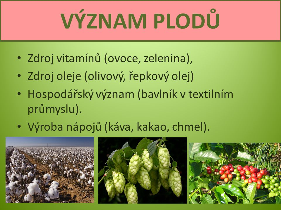 VÝZNAM PLODŮ Zdroj vitamínů (ovoce, zelenina),