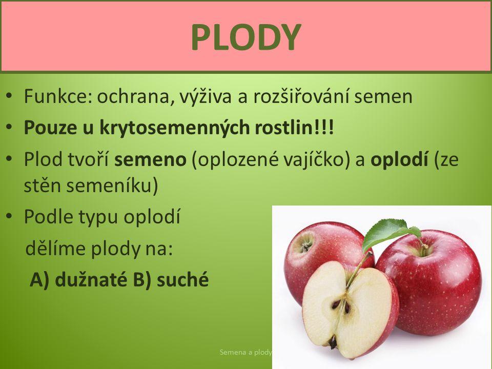 PLODY Funkce: ochrana, výživa a rozšiřování semen