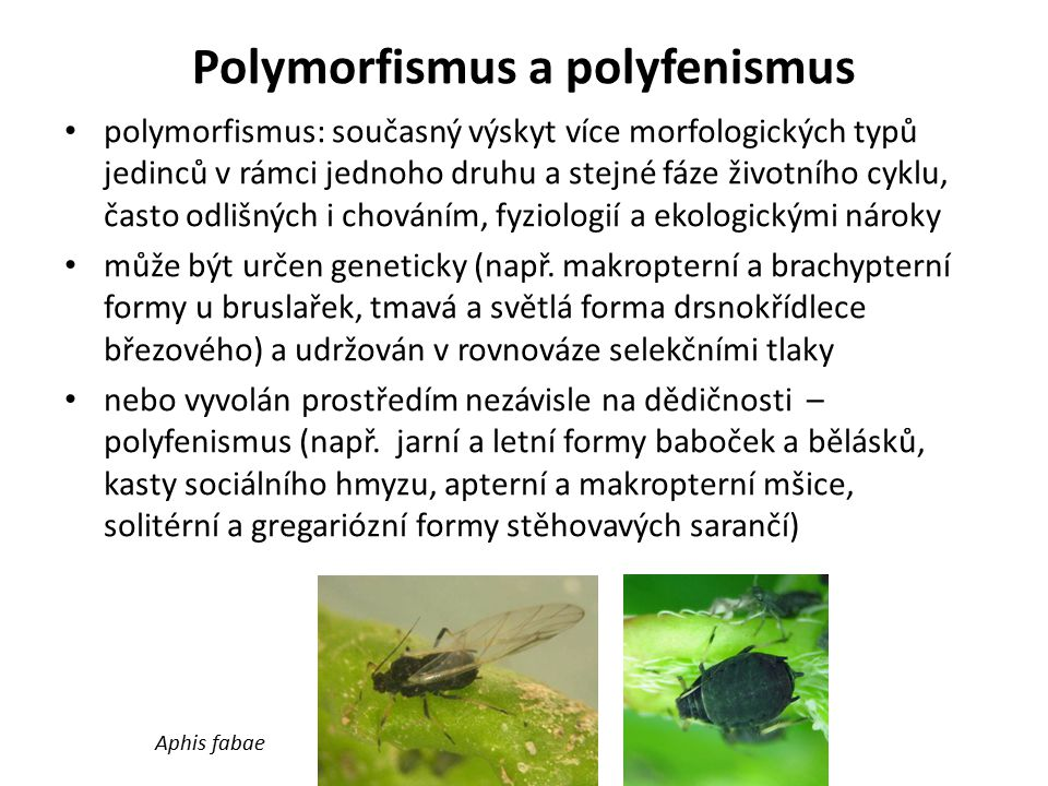 Polymorfismus a polyfenismus