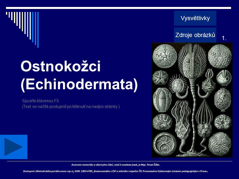 Ostnokožci (Echinodermata)