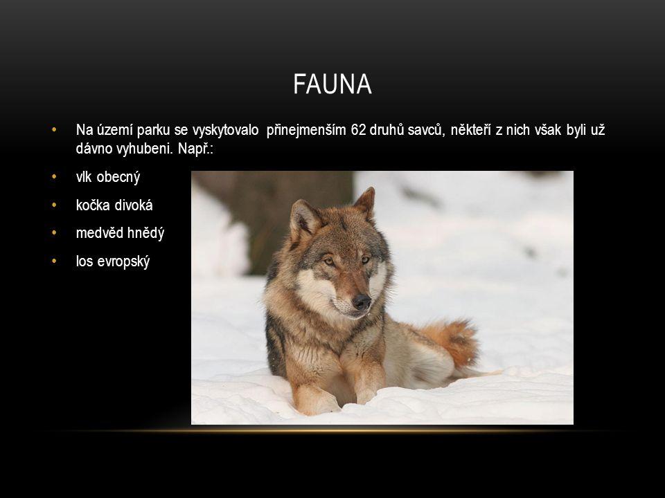 Fauna Na území parku se vyskytovalo přinejmenším 62 druhů savců, někteří z nich však byli už dávno vyhubeni. Např.: