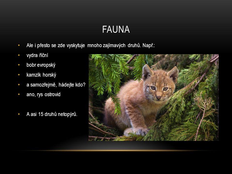 fauna Ale i přesto se zde vyskytuje mnoho zajímavých druhů. Např.: